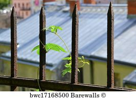 Perfekt Eisenzaun Art Print Poster   A Plant In A Rusted Fence