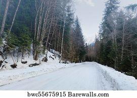 Winter Forest Concept Art