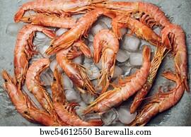 131 Argentine Red Shrimp Posters And Art Prints Barewalls