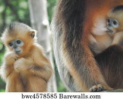 baby monkey art print poster baby monkey with mother 5