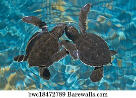 Cute Baby Sea Turtle Turtles Poster 60X90cm180gsm Print #3069 A1
