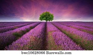 Single Line Art Print : Single line posters and art prints barewalls