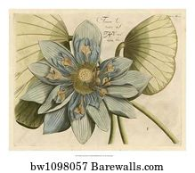 55555 Lotus Flower Posters And Art Prints Barewalls