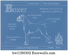 13079 dog sketch posters and art prints barewalls dog sketch art print poster blueprint boxer malvernweather Image collections