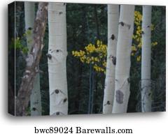 NATURE TREES 890 ASPEN YELLOW GROVE SCENIC POSTER 24x36