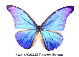 19 334 Purple Butterfly Canvas Prints And Canvas Art Barewalls