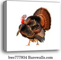 9 410 tom canvas prints and tom canvas art barewalls
