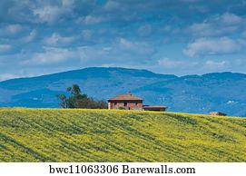 Fiori Gialli Toscana.7 Fiori Gialli Posters And Art Prints Barewalls