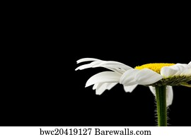 1 444 condolences posters and art prints barewalls