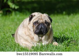 953 Puppy Fat Posters And Art Prints Barewalls