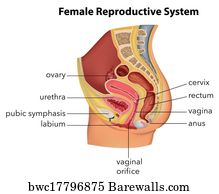 Vagina Art Print Poster Female Reproductive System