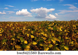 949 Intensive agriculture Posters and Art Prints | Barewalls