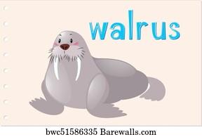 walrus clipart.html