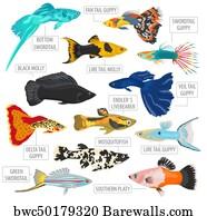 Fantail Guppy Art Print Poster