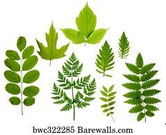 8910 Acacia Tree Posters And Art Prints Barewalls