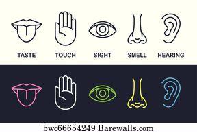 117 5 senses Posters and Art Prints | Barewalls