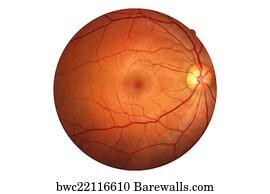 69 Retinal artery Posters and Art Prints | Barewalls