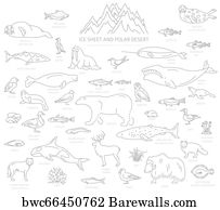 13 Arctic Flounder Posters And Art Prints Barewalls