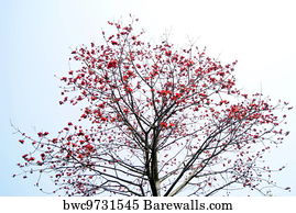 355 Kapok tree Posters and Art Prints | Barewalls