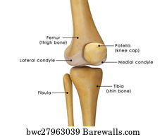 11 lateral condyle posters and art prints barewalls