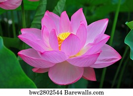 9047 Buddha Lotus Posters And Art Prints Barewalls