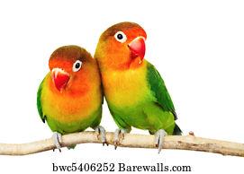 Inseparable Art Print Poster Pair Of Lovebirds
