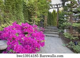 418 pink flowering maple posters and art prints barewalls pink flowering maple art print poster pink azaleas blooming along garden path mightylinksfo