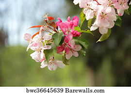 Art print of pink flowers on a crabapple tree branch barewalls pink flowers on a crabapple tree branch mightylinksfo