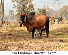 Brahmans wife sexual dysfunction