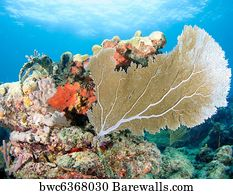695 fan coral posters and art prints barewalls fan coral art print poster reef composition with large sea fan on a coral ledge publicscrutiny Choice Image