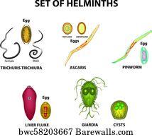 116 Intestinal Worms Posters And Art Prints Barewalls