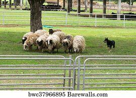 4,286 Shepherd sheep Posters and Art Prints | Barewalls