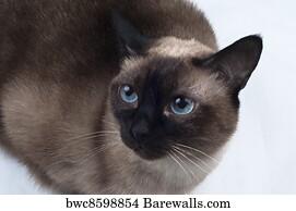 Bath Soap Company Siamese Cat Poster Art Print Decor 11x17 16x24 24x36