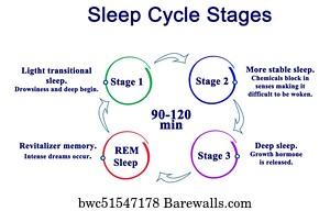 sleep cycles art print poster sleep cycle stages