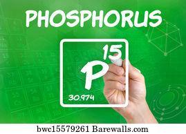 86 periodic table of the elements phosphorus posters and art prints periodic table of the elements phosphorus art print poster symbol for the chemical element phosphorus urtaz Images