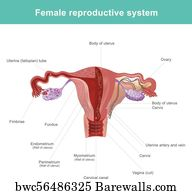 132 Labia Posters and Art Prints | Barewalls