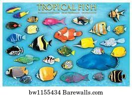 Tropical Fish Art Print Poster