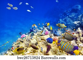 Seascape Underwater Art Print Poster