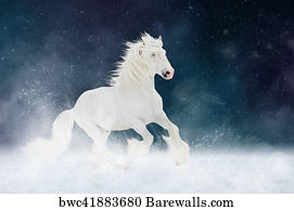 White Shire Horse Stallion Runs Gallop Over Star Sky Background