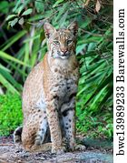 rufus cougar women 46 david williams db 3 kendall williams wr 98 rufus williams dl 57 raul  williamson lb 42 jermain woodard rb 65 nathan woody ol.
